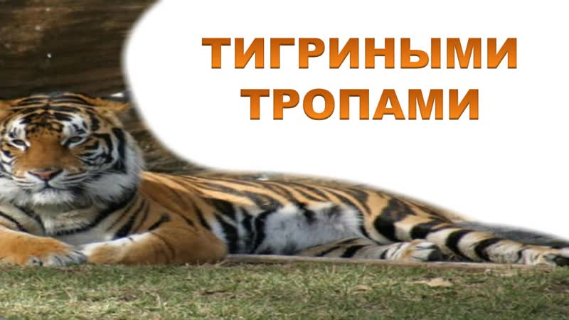 Тигриными тропами