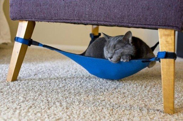 Гамак для кошек: отдыхаем после трудового дня вместе...