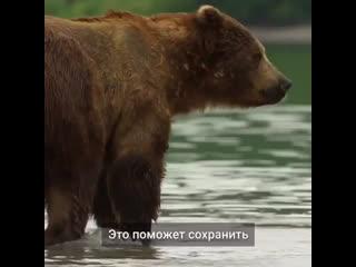 Ответственное отношение к природе