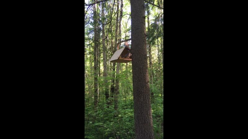 Прогулка в Гайвинском лесу