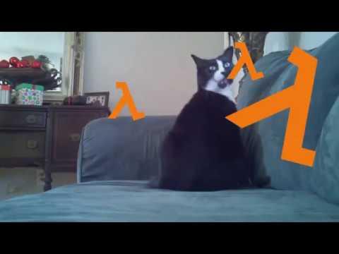 Hl cat