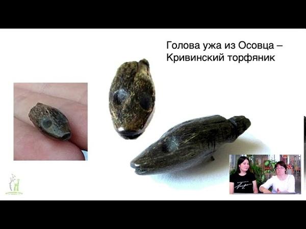 Лекция Болотная археология