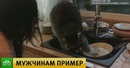 В Алма-Ате енот забрался в чужой дом и помыл посуду